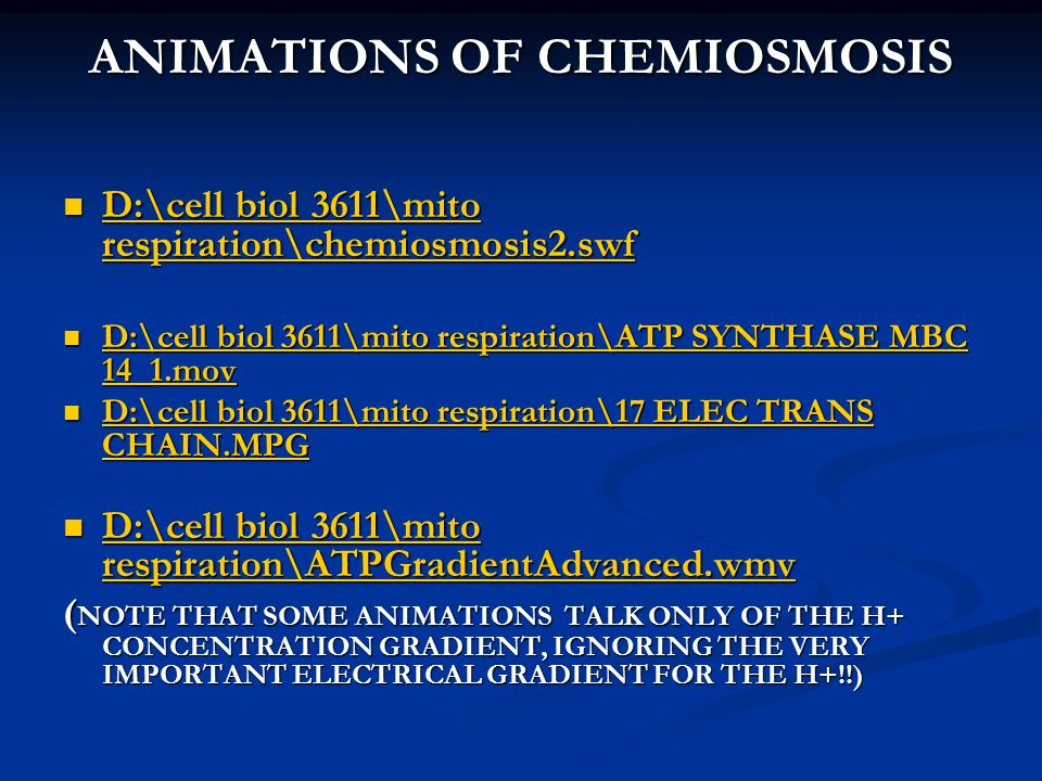 ANIMATIONS OF CHEMIOSMOSIS D:\cell biol 3611\mito respiration\chemiosmosis2.swf D:\cell biol 3611\mito respiration\chemiosmosis2.swf D:\cell biol 3611\mito respiration\chemiosmosis2.swf D:\cell biol 3611\mito respiration\chemiosmosis2.swf D:\cell biol 3611\mito respiration\ATP SYNTHASE MBC 14_1.mov D:\cell biol 3611\mito respiration\ATP SYNTHASE MBC 14_1.mov D:\cell biol 3611\mito respiration\ATP SYNTHASE MBC 14_1.mov D:\cell biol 3611\mito respiration\ATP SYNTHASE MBC 14_1.mov D:\cell biol 3611\mito respiration\17 ELEC TRANS CHAIN.MPG D:\cell biol 3611\mito respiration\17 ELEC TRANS CHAIN.MPG D:\cell biol 3611\mito respiration\17 ELEC TRANS CHAIN.MPG D:\cell biol 3611\mito respiration\17 ELEC TRANS CHAIN.MPG D:\cell biol 3611\mito respiration\ATPGradientAdvanced.wmv D:\cell biol 3611\mito respiration\ATPGradientAdvanced.wmv D:\cell biol 3611\mito respiration\ATPGradientAdvanced.wmv D:\cell biol 3611\mito respiration\ATPGradientAdvanced.wmv ( NOTE THAT SOME ANIMATIONS TALK ONLY OF THE H+ CONCENTRATION GRADIENT, IGNORING THE VERY IMPORTANT ELECTRICAL GRADIENT FOR THE H+!!)