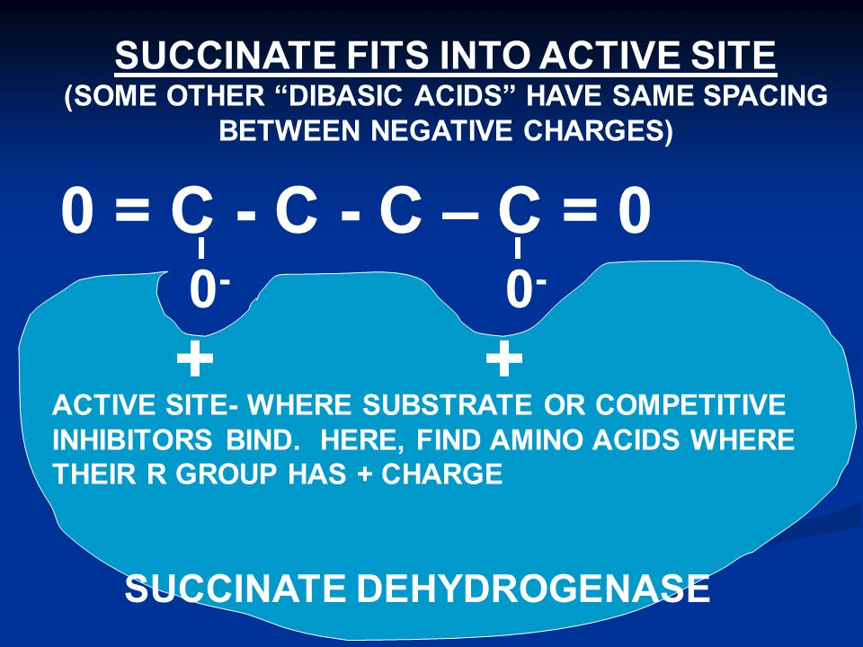 0 = C - C - C – C = 0 SUCCINATE DEHYDROGENASE ACTIVE SITE- WHERE SUBSTRATE OR COMPETITIVE INHIBITORS BIND.