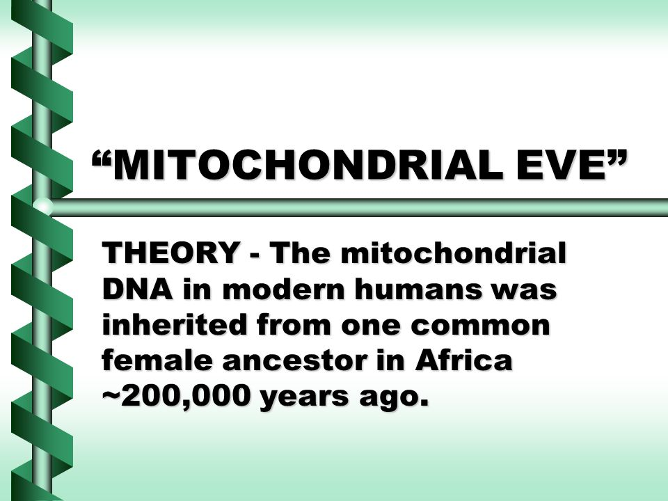 MITOCHONDRIAL EVE THEORY - The mitochondrial DNA in modern humans was inherited from one common female ancestor in Africa ~200,000 years ago.