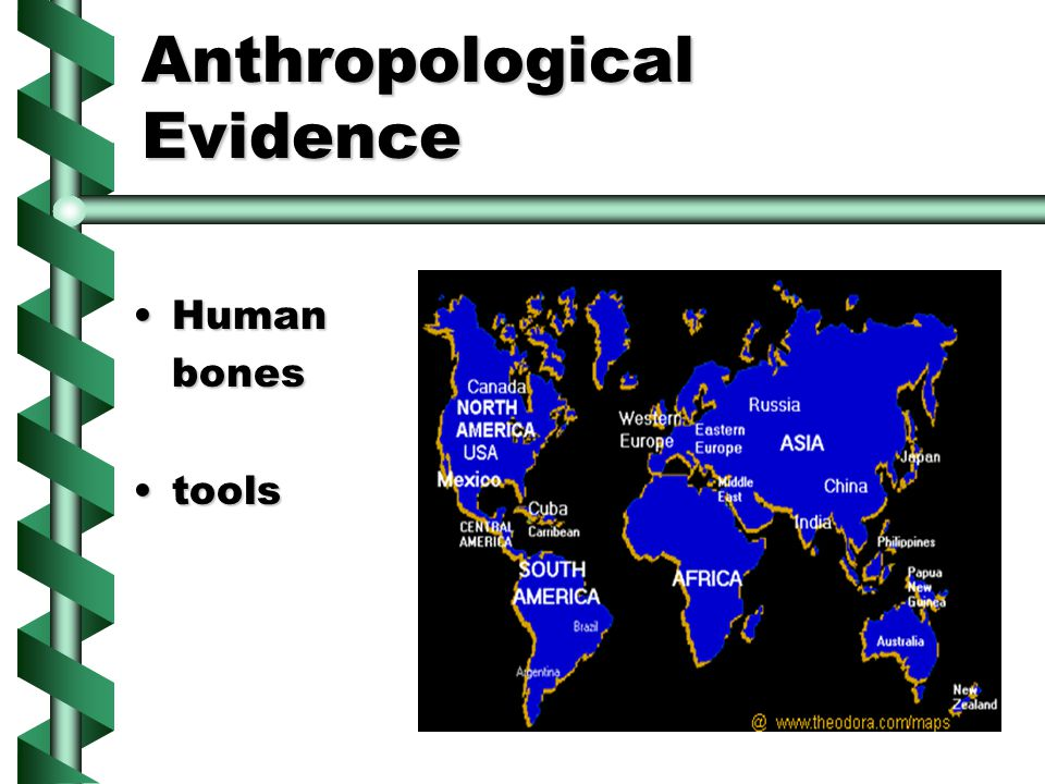 Anthropological Evidence HumanHumanbones toolstools