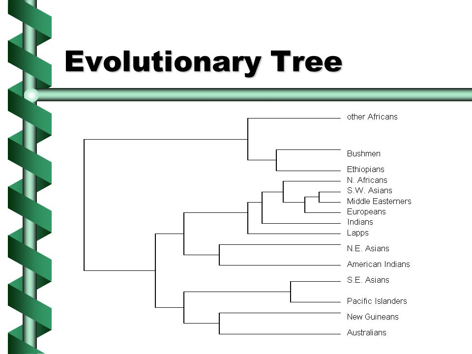 Anthropological Evidence HumanHumanbones toolstools