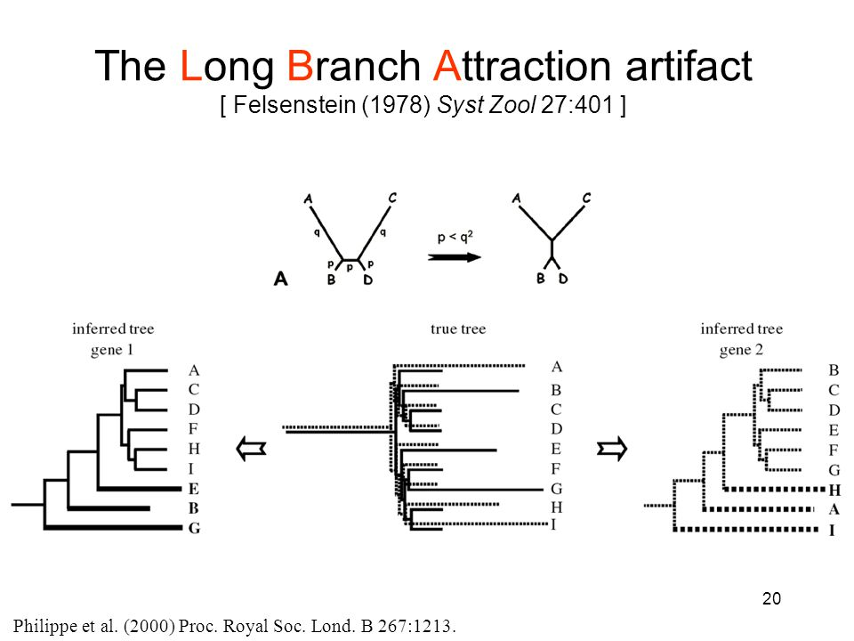 20 The Long Branch Attraction artifact [ Felsenstein (1978) Syst Zool 27:401 ] Philippe et al.