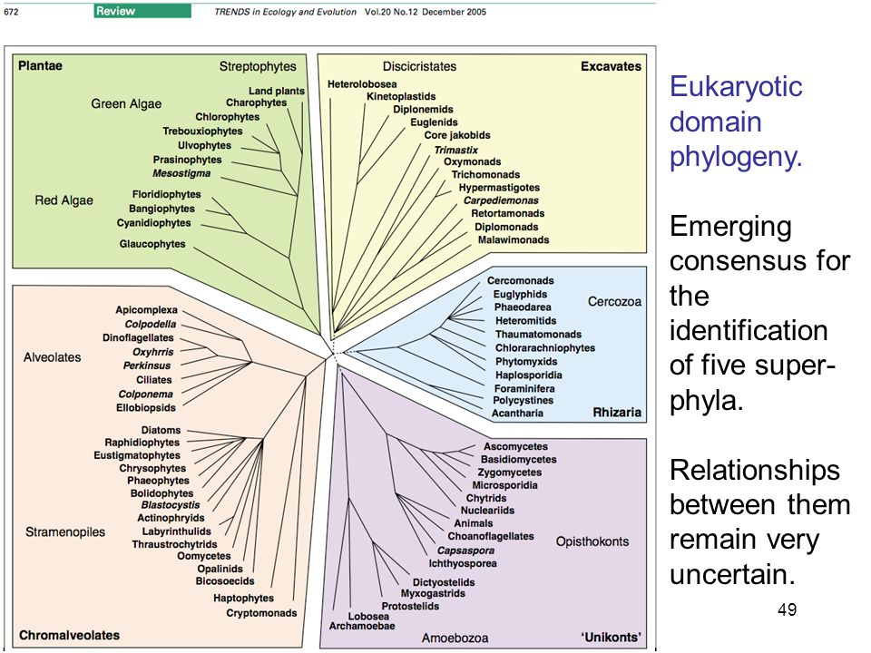 49 Eukaryotic domain phylogeny. Emerging consensus for the identification of five super- phyla.