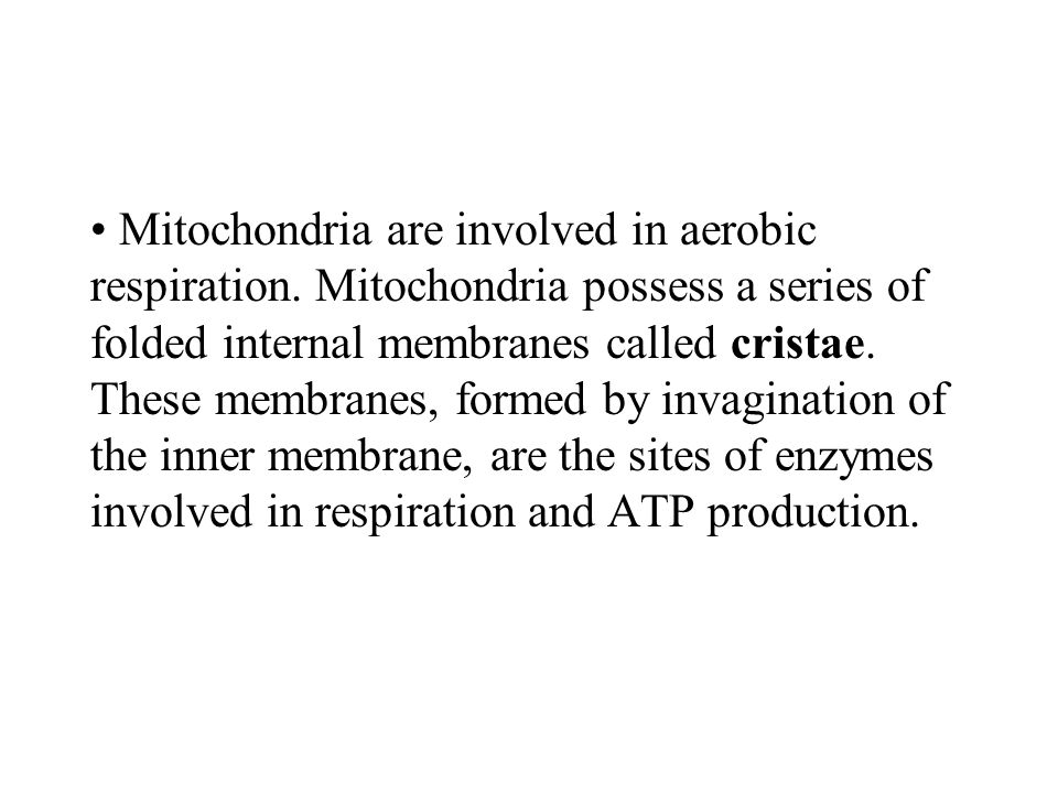 Mitochondria are involved in aerobic respiration. Mitochondria possess a series of folded internal membranes called cristae. These membranes, formed b