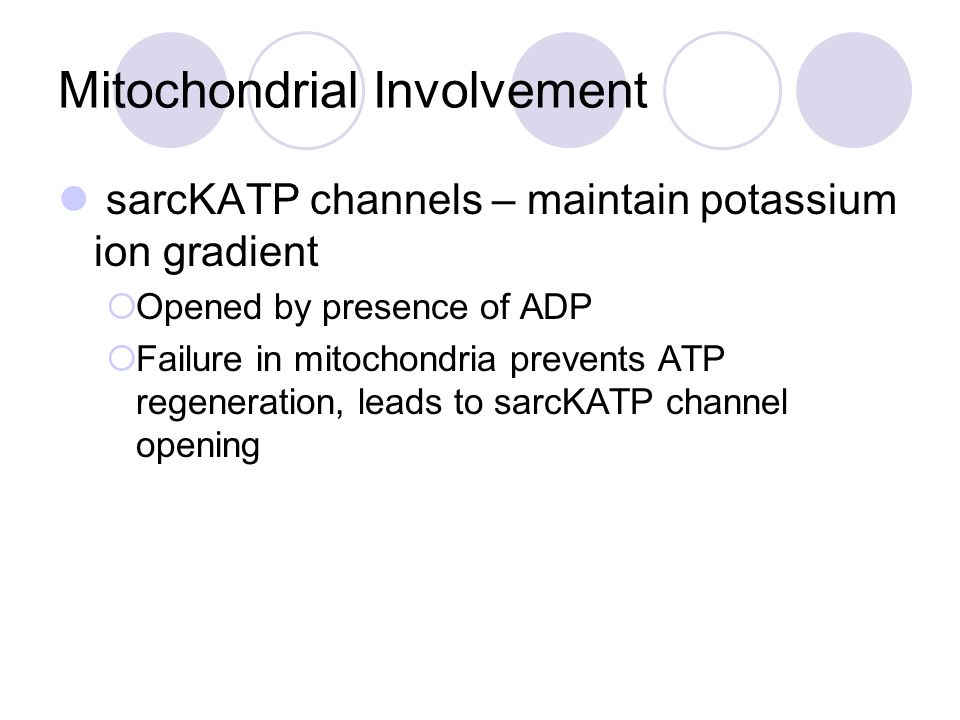 Mitochondrial Involvement sarcKATP channels – maintain potassium ion gradient  Opened by presence of ADP  Failure in mitochondria prevents ATP regen