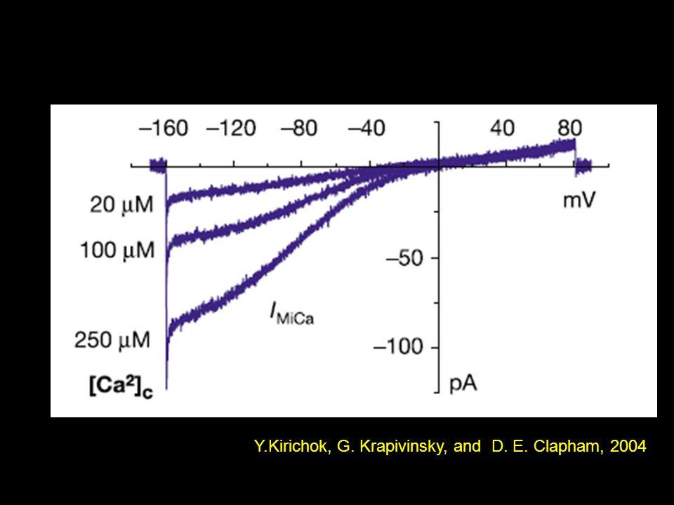 Y.Kirichok, G. Krapivinsky, and D. E. Clapham, 2004