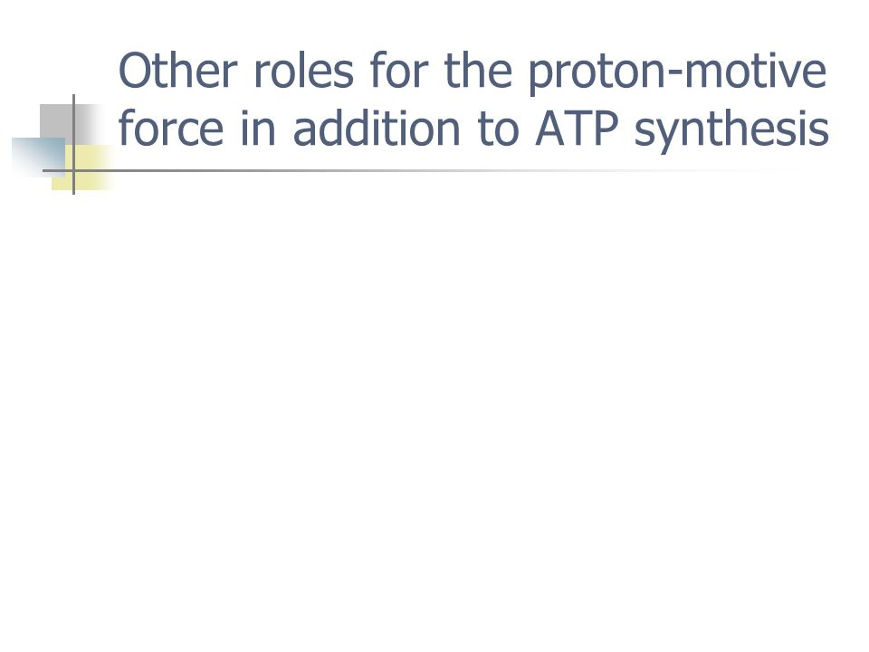 Other roles for the proton-motive force in addition to ATP synthesis