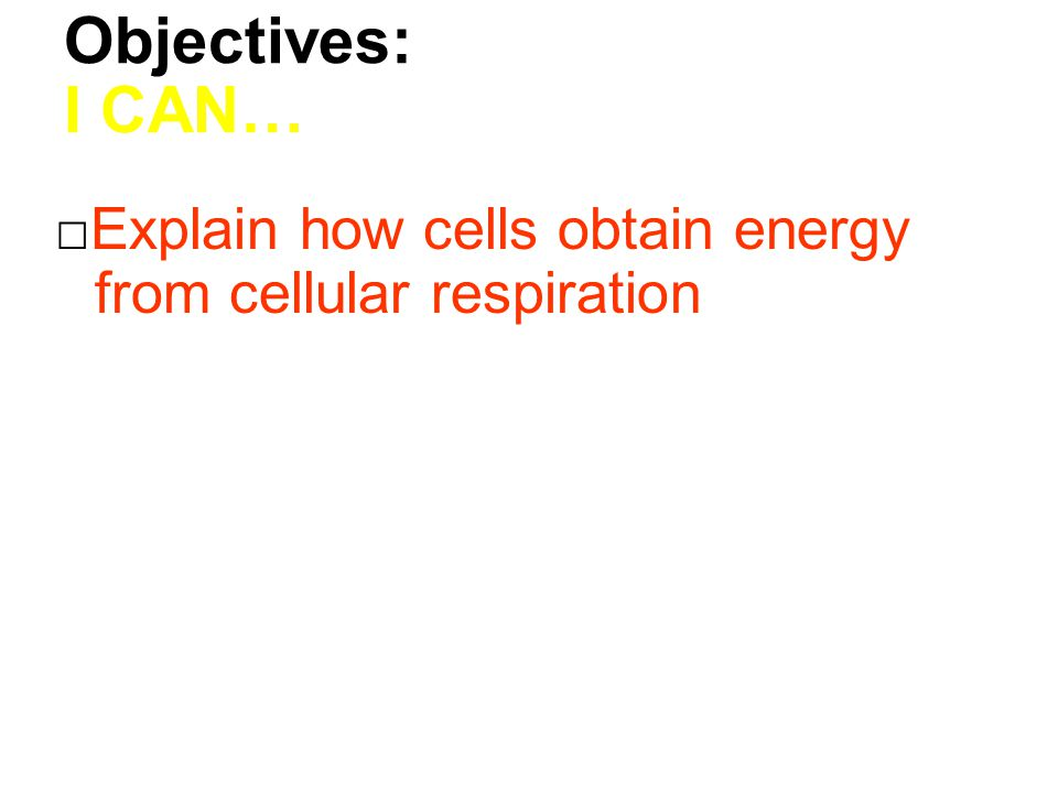 Objectives: I CAN… □Explain how cells obtain energy from cellular respiration