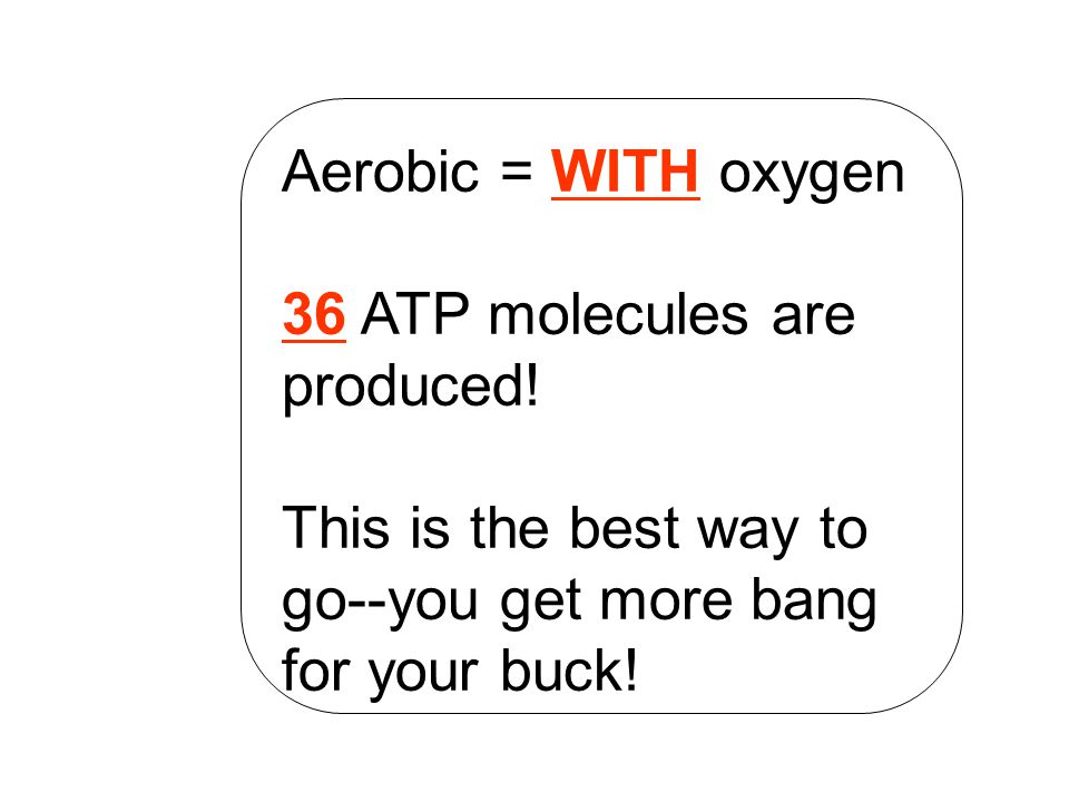 Aerobic = WITH oxygen 36 ATP molecules are produced.