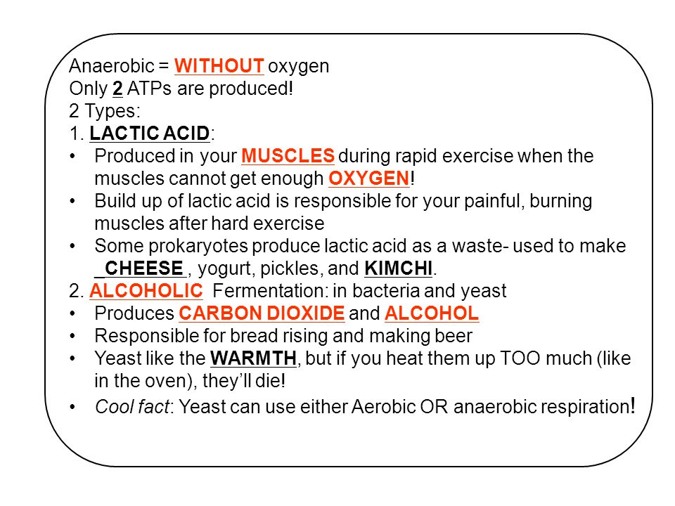 Anaerobic = WITHOUT oxygen Only 2 ATPs are produced.