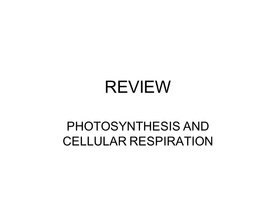 REVIEW PHOTOSYNTHESIS AND CELLULAR RESPIRATION