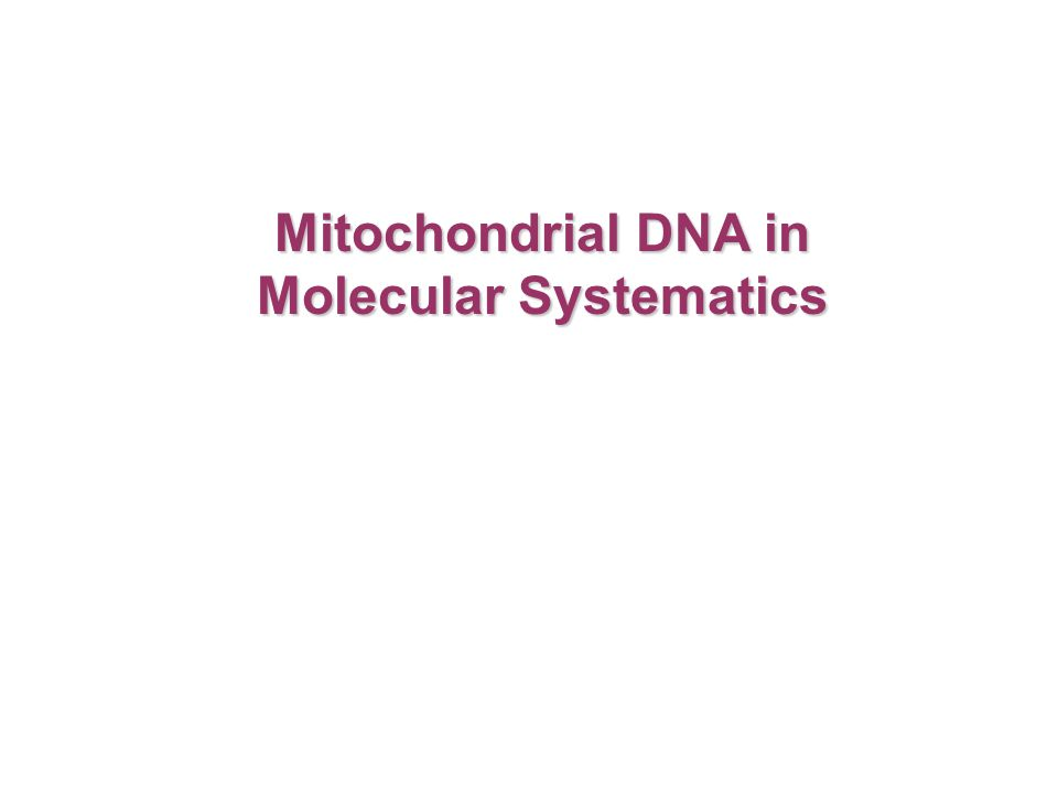 Mitochondrial DNA in Molecular Systematics