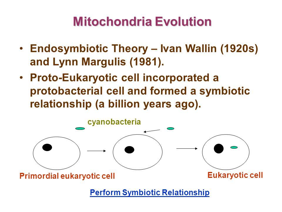 Animal mtDNA Non-recombination.Contains less non-coding sequences.