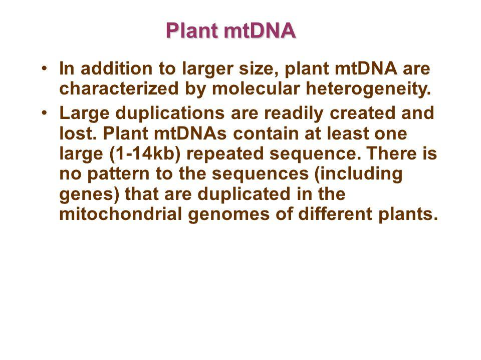Recombination between repeats creates a complex, multipartite genome structure.