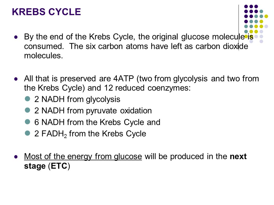 KREBS CYCLE By the end of the Krebs Cycle, the original glucose molecule is consumed.