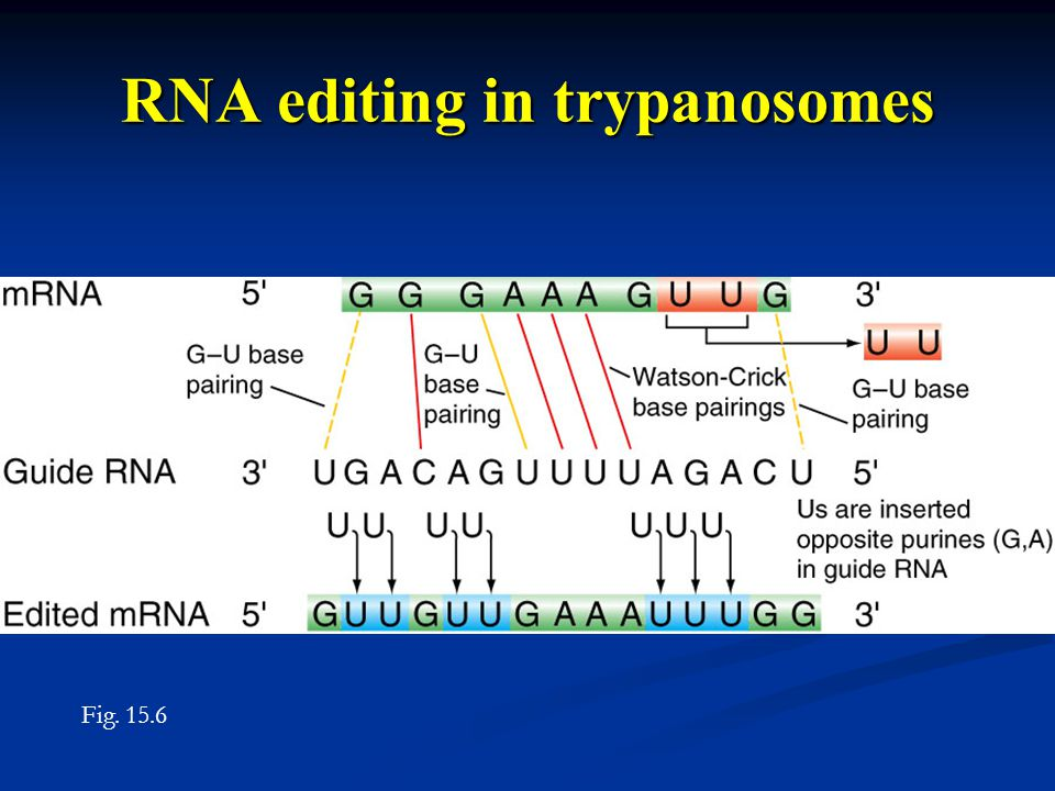 RNA editing in trypanosomes Fig. 15.6