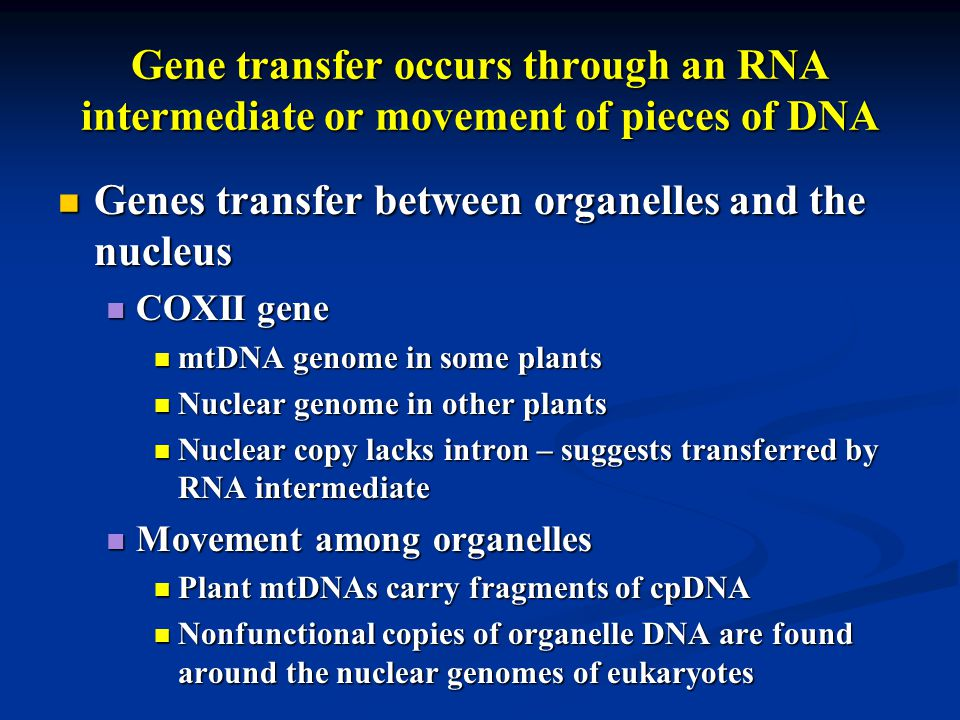 Gene transfer occurs through an RNA intermediate or movement of pieces of DNA Genes transfer between organelles and the nucleus Genes transfer between organelles and the nucleus COXII gene COXII gene mtDNA genome in some plants mtDNA genome in some plants Nuclear genome in other plants Nuclear genome in other plants Nuclear copy lacks intron – suggests transferred by RNA intermediate Nuclear copy lacks intron – suggests transferred by RNA intermediate Movement among organelles Movement among organelles Plant mtDNAs carry fragments of cpDNA Plant mtDNAs carry fragments of cpDNA Nonfunctional copies of organelle DNA are found around the nuclear genomes of eukaryotes Nonfunctional copies of organelle DNA are found around the nuclear genomes of eukaryotes