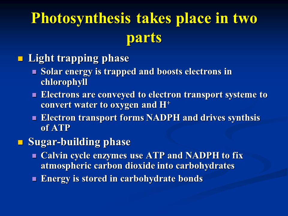 Photosynthesis takes place in two parts Light trapping phase Light trapping phase Solar energy is trapped and boosts electrons in chlorophyll Solar energy is trapped and boosts electrons in chlorophyll Electrons are conveyed to electron transport systeme to convert water to oxygen and H + Electrons are conveyed to electron transport systeme to convert water to oxygen and H + Electron transport forms NADPH and drives synthsis of ATP Electron transport forms NADPH and drives synthsis of ATP Sugar-building phase Sugar-building phase Calvin cycle enzymes use ATP and NADPH to fix atmospheric carbon dioxide into carbohydrates Calvin cycle enzymes use ATP and NADPH to fix atmospheric carbon dioxide into carbohydrates Energy is stored in carbohydrate bonds Energy is stored in carbohydrate bonds