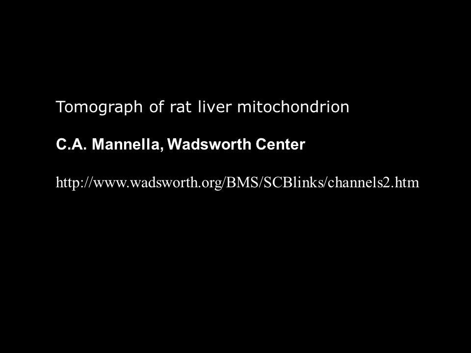 Tomograph of rat liver mitochondrion C.A.