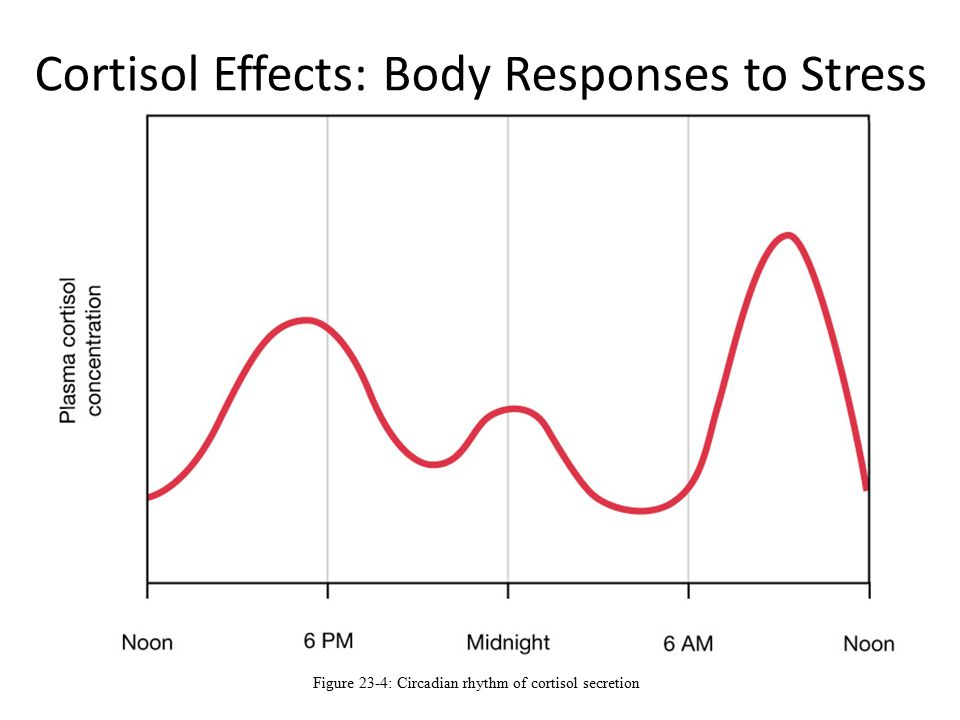 Cortisol Effects: Body Responses to Stress Figure 23-4: Circadian rhythm of cortisol secretion