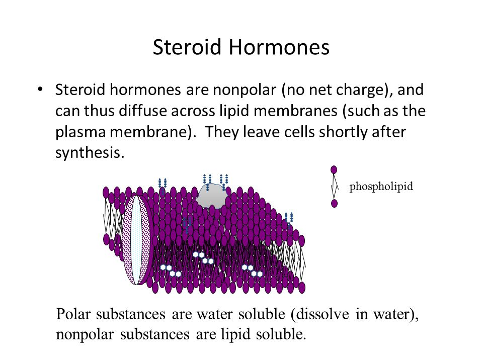 Steroid Hormones Steroid hormones are nonpolar (no net charge), and can thus diffuse across lipid membranes (such as the plasma membrane).