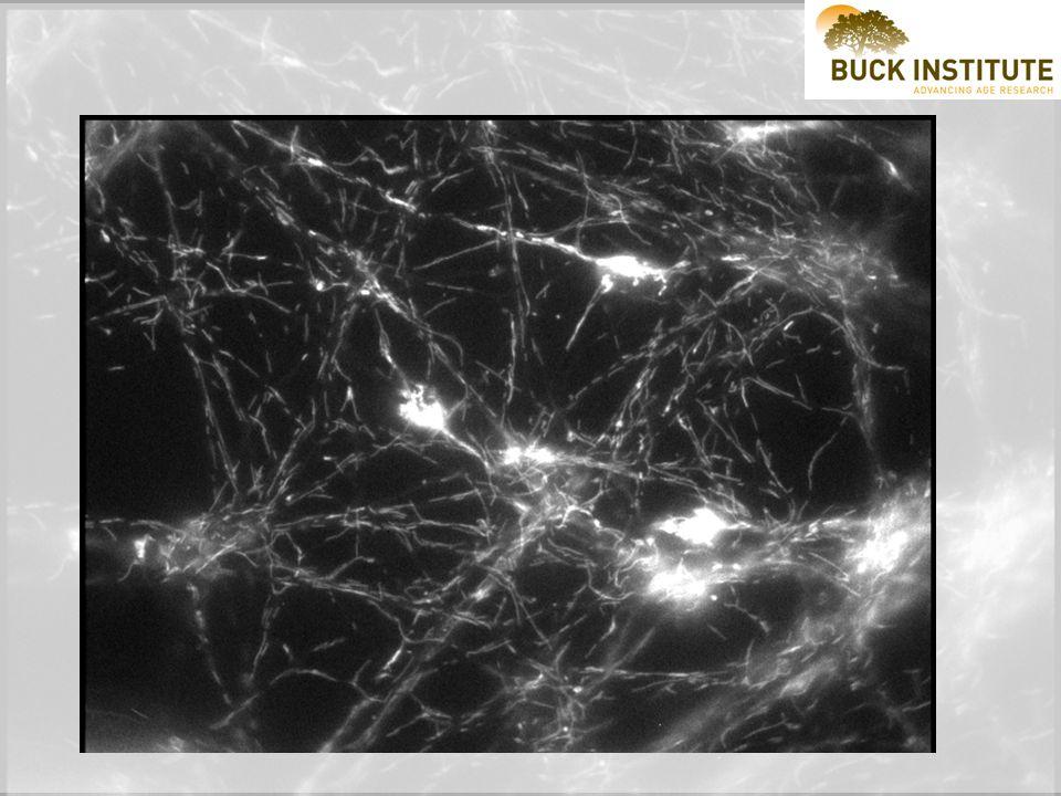Outer membraneInter-membrane spaceInner membraneMatrixCristae