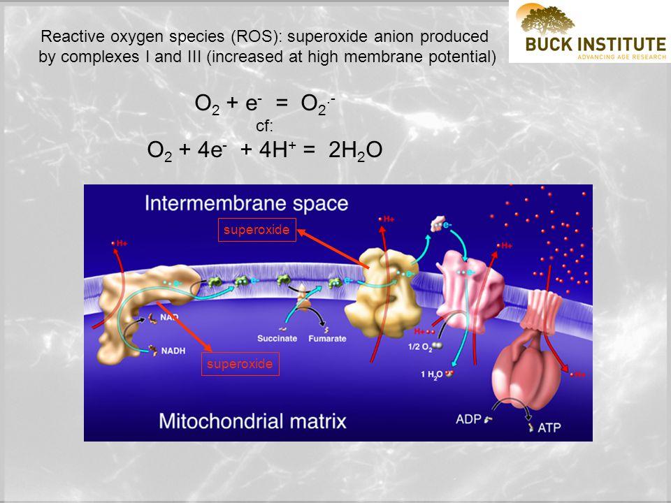 Mitochondria and 'stress' i.e.