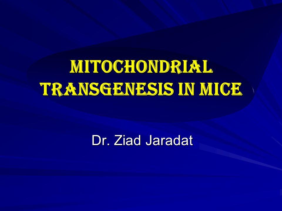 Mitochondrial Transgenesis in mice Dr. Ziad Jaradat