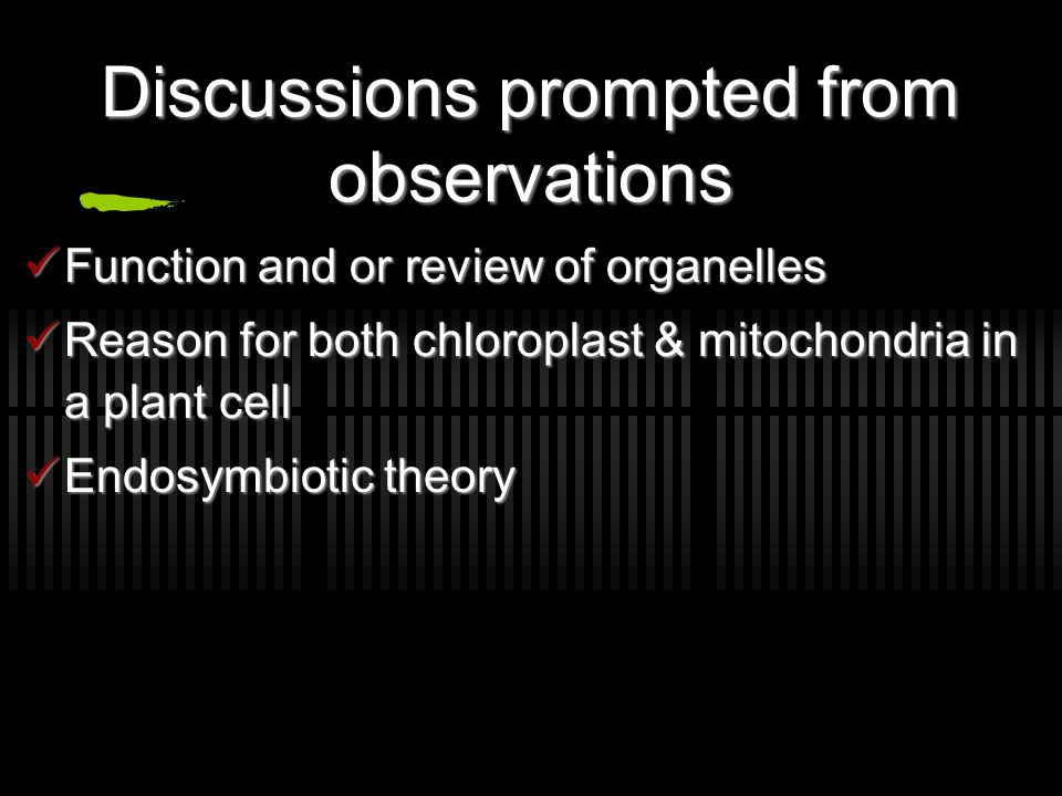 Discussions prompted from observations Function and or review of organelles Function and or review of organelles Reason for both chloroplast & mitochondria in a plant cell Reason for both chloroplast & mitochondria in a plant cell Endosymbiotic theory Endosymbiotic theory