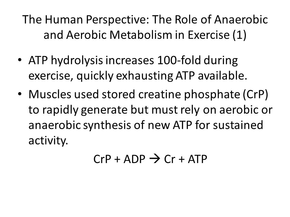 The Human Perspective: The Role of Anaerobic and Aerobic Metabolism in Exercise (1) ATP hydrolysis increases 100-fold during exercise, quickly exhaust