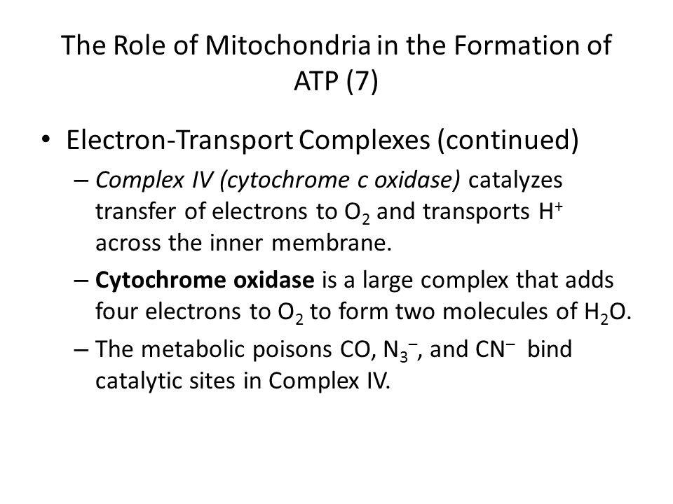 The Role of Mitochondria in the Formation of ATP (7) Electron-Transport Complexes (continued) – Complex IV (cytochrome c oxidase) catalyzes transfer o