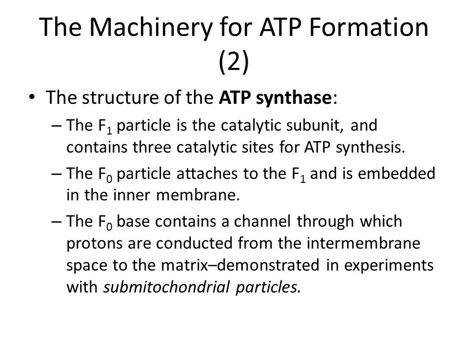 The Machinery for ATP Formation (2) The structure of the ATP synthase: – The F 1 particle is the catalytic subunit, and contains three catalytic sites