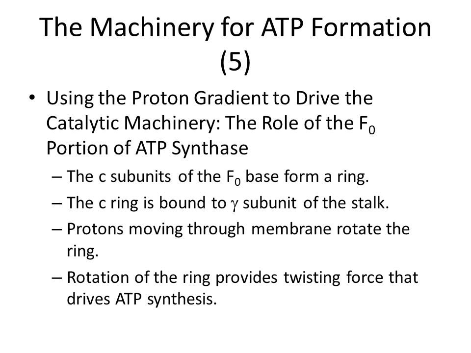 The Machinery for ATP Formation (5) Using the Proton Gradient to Drive the Catalytic Machinery: The Role of the F 0 Portion of ATP Synthase – The c su