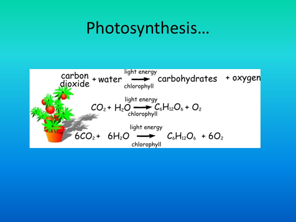 Photosynthesis…