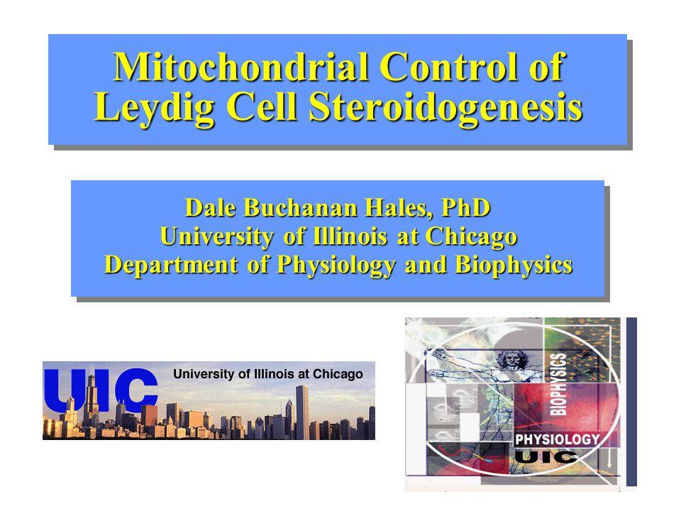 Effect of mitochondrial agents on StAR protein expression 37 kDa Control cAMP + oligomycin + arsenate + CCCP 30 kDa
