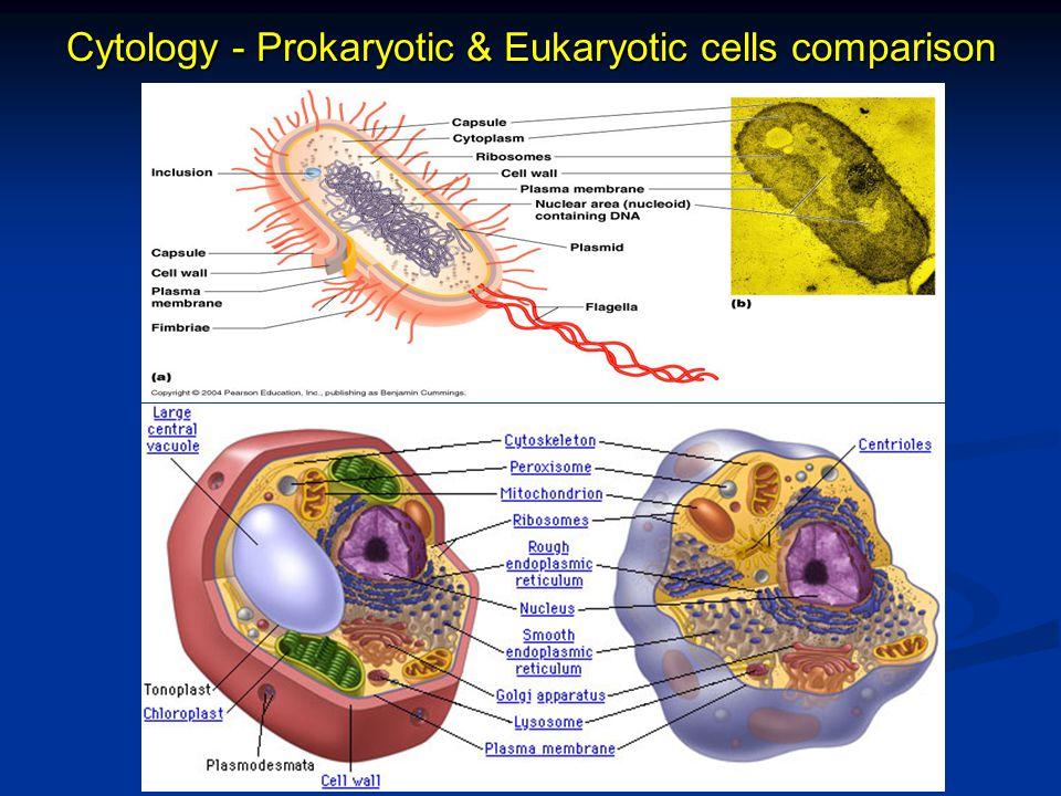 Cytology - Prokaryotic & Eukaryotic cells comparison