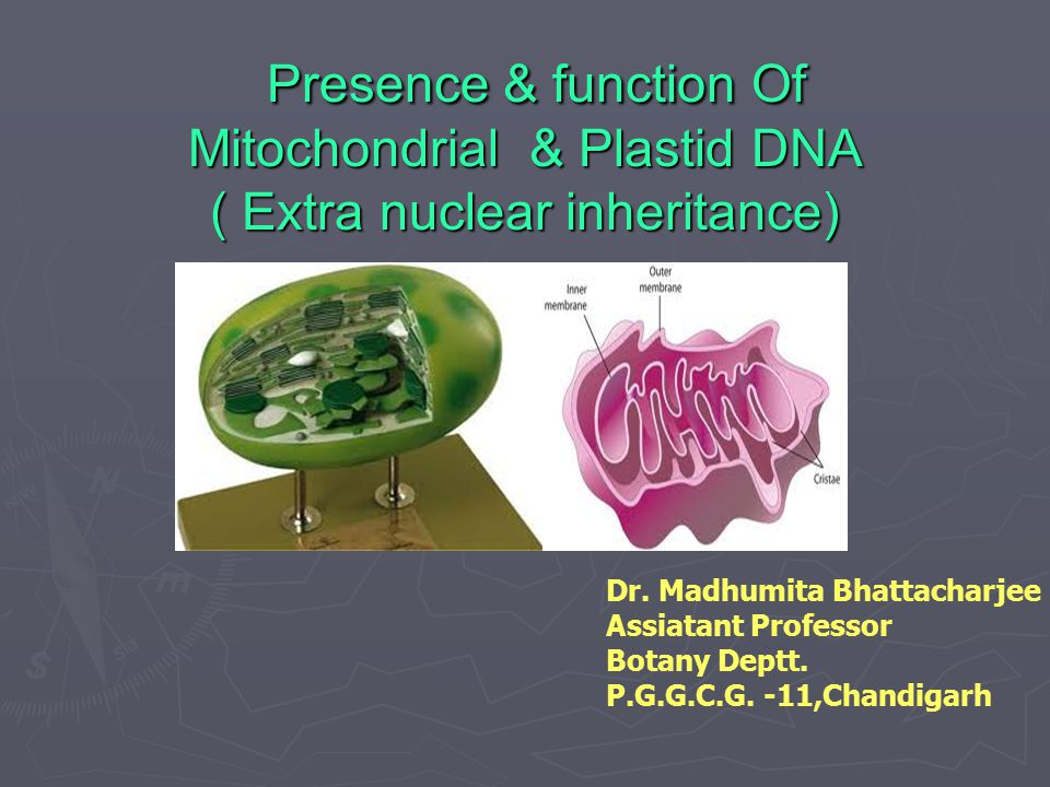 Presence & function Of Mitochondrial & Plastid DNA ( Extra nuclear inheritance) Presence & function Of Mitochondrial & Plastid DNA ( Extra nuclear inh