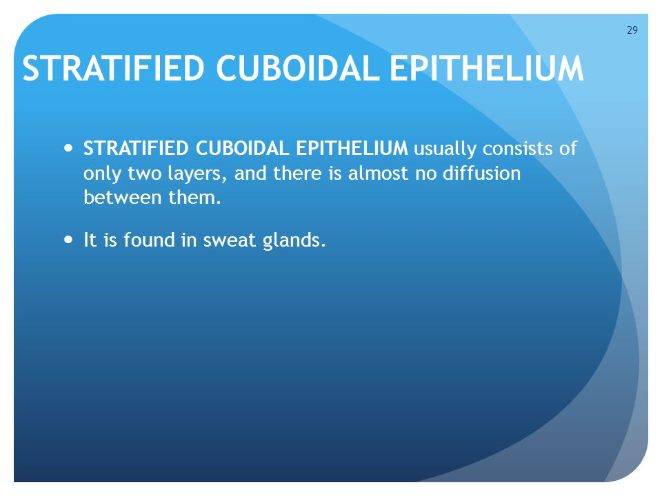 STRATIFIED CUBOIDAL EPITHELIUM STRATIFIED CUBOIDAL EPITHELIUM usually consists of only two layers, and there is almost no diffusion between them. It i