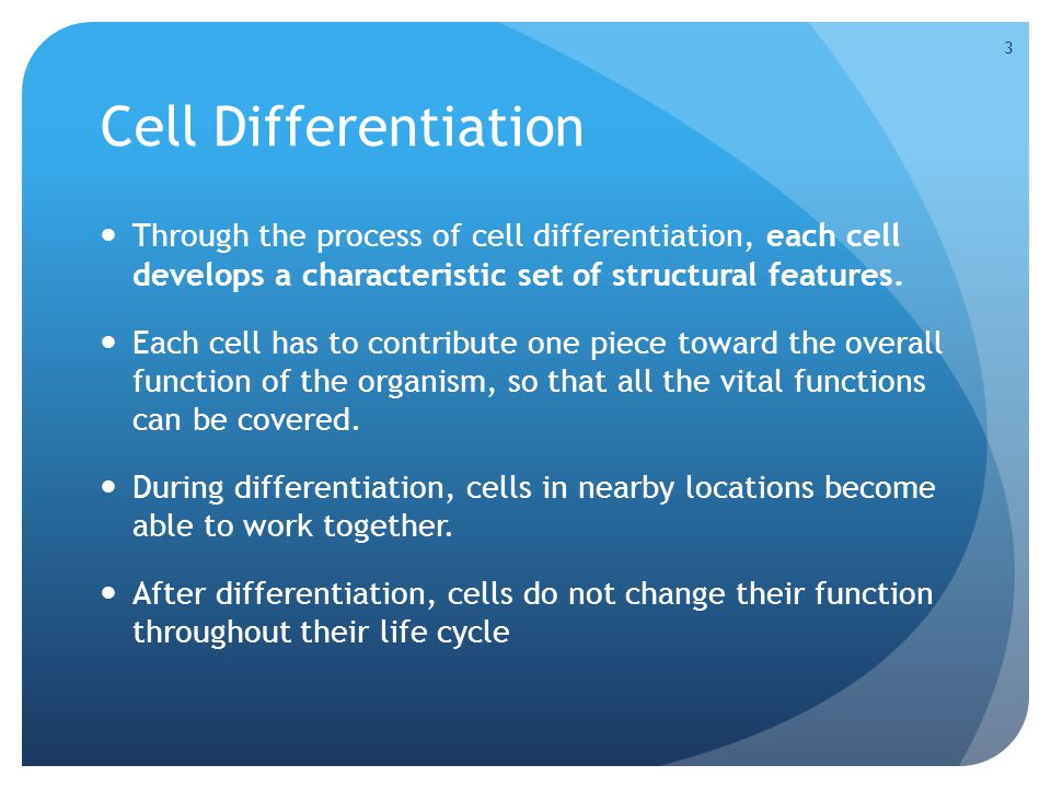 TRANSITIONAL EPITHELIUM TRANSITIONAL EPITHELIUM can stretch and change shape.