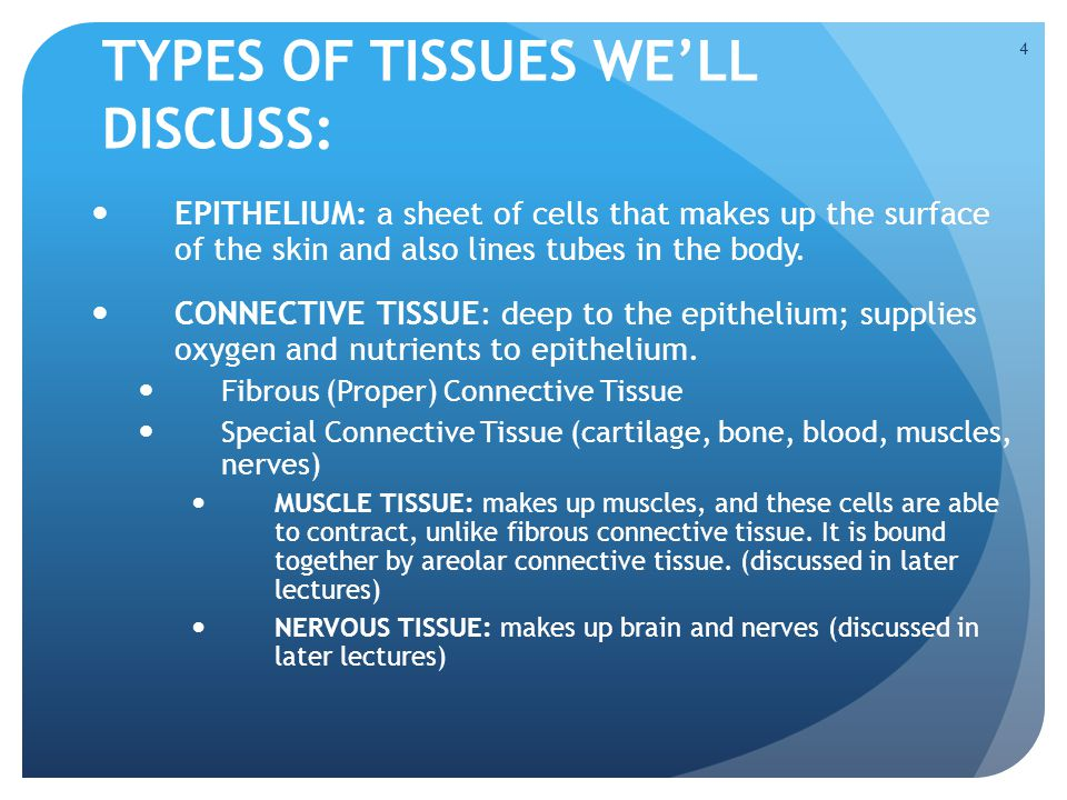 TYPES OF TISSUES WE'LL DISCUSS: EPITHELIUM: a sheet of cells that makes up the surface of the skin and also lines tubes in the body. CONNECTIVE TISSUE