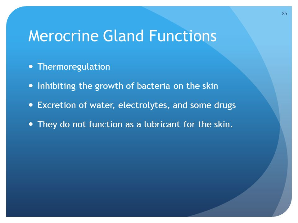 Merocrine Gland Functions Thermoregulation Inhibiting the growth of bacteria on the skin Excretion of water, electrolytes, and some drugs They do not