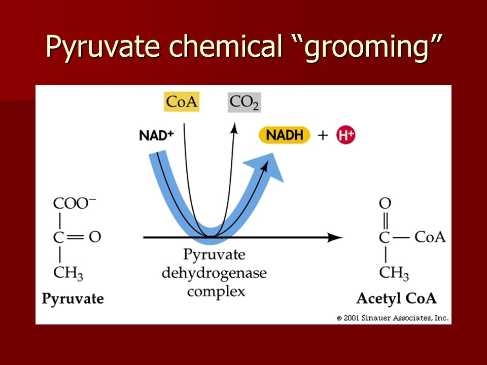 """Pyruvate chemical """"grooming"""""""