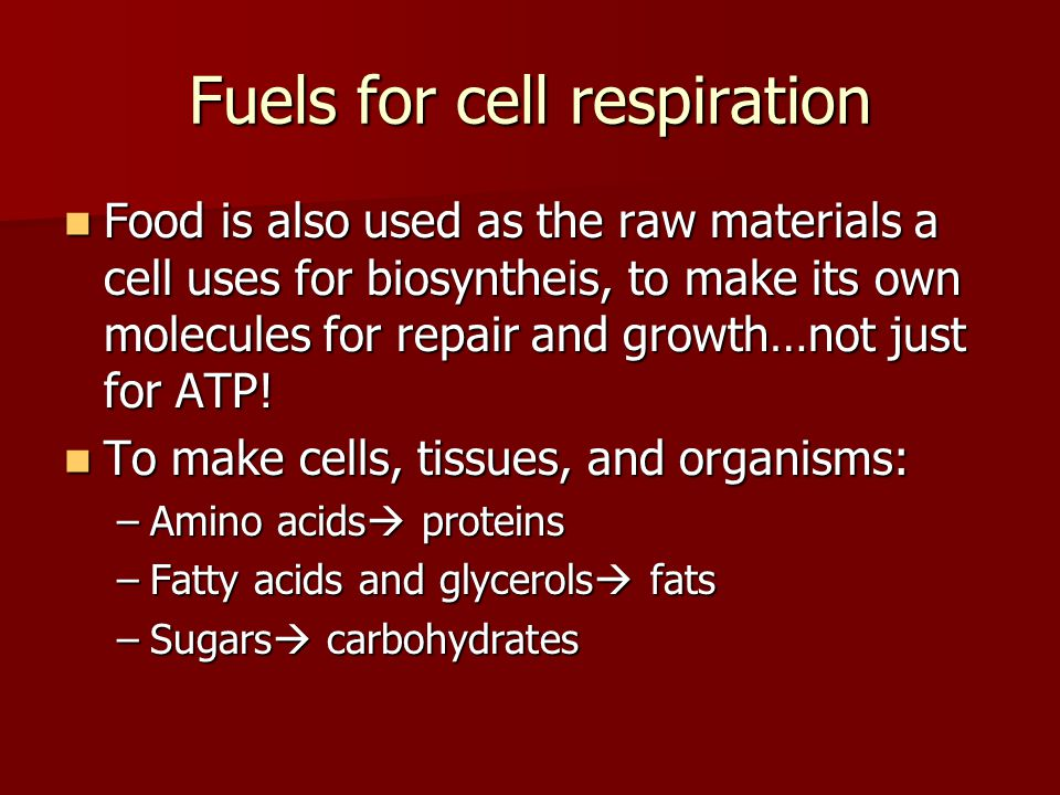 Fuels for cell respiration Food is also used as the raw materials a cell uses for biosyntheis, to make its own molecules for repair and growth…not jus