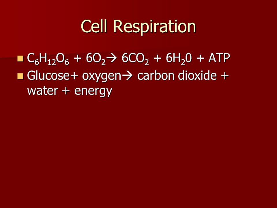 Cell Respiration C 6 H 12 O 6 + 6O 2  6CO 2 + 6H 2 0 + ATP C 6 H 12 O 6 + 6O 2  6CO 2 + 6H 2 0 + ATP Glucose+ oxygen  carbon dioxide + water + ener