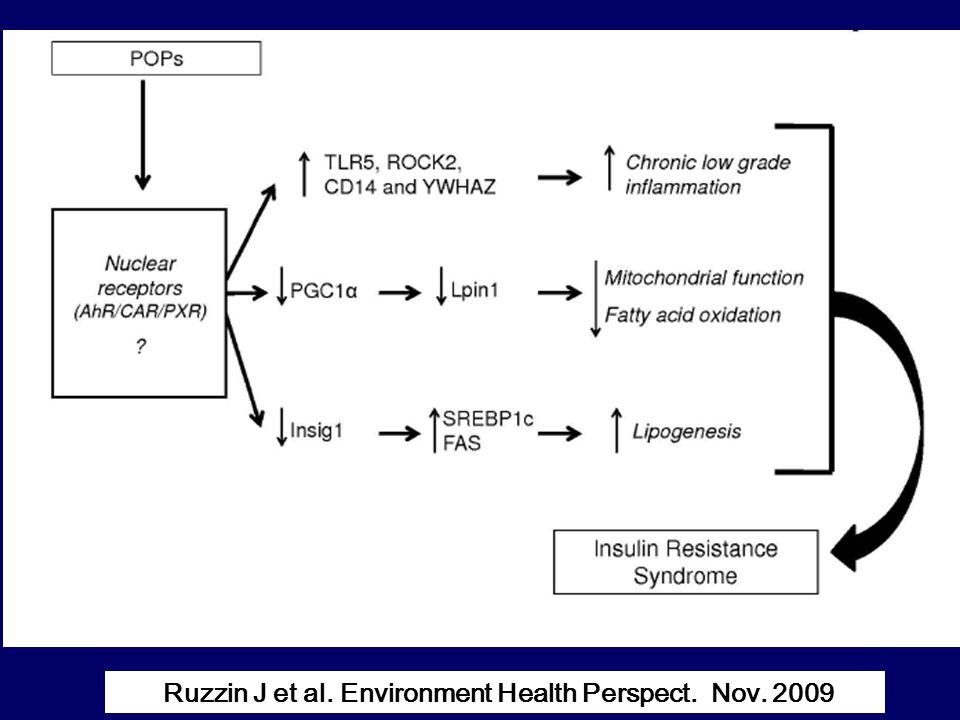 Ruzzin J et al. Environment Health Perspect. Nov. 2009