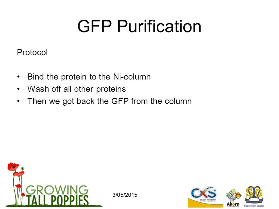 GFP Purification Protocol Bind the protein to the Ni-column Wash off all other proteins Then we got back the GFP from the column 3/05/2015