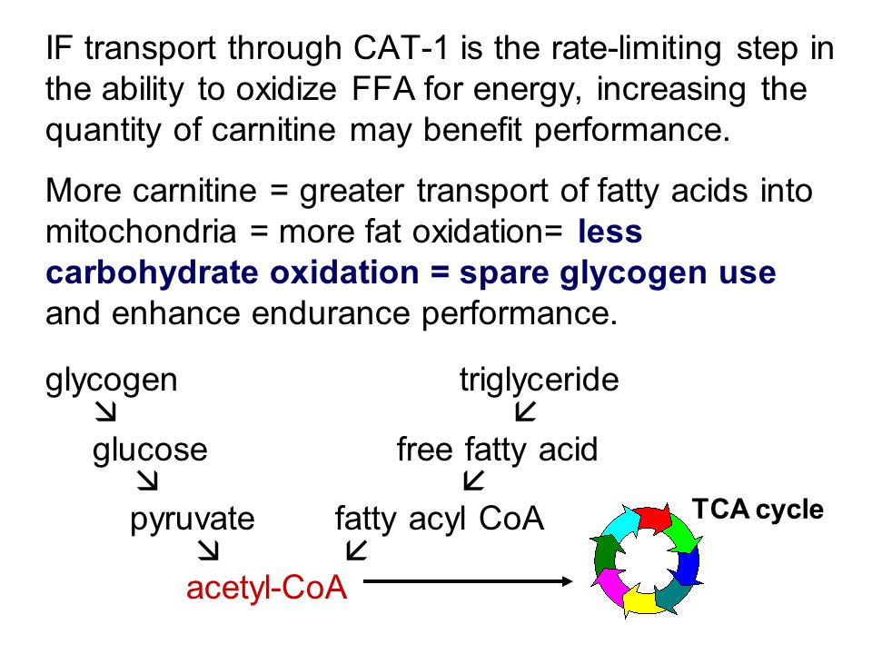 IF transport through CAT-1 is the rate-limiting step in the ability to oxidize FFA for energy, increasing the quantity of carnitine may benefit performance.
