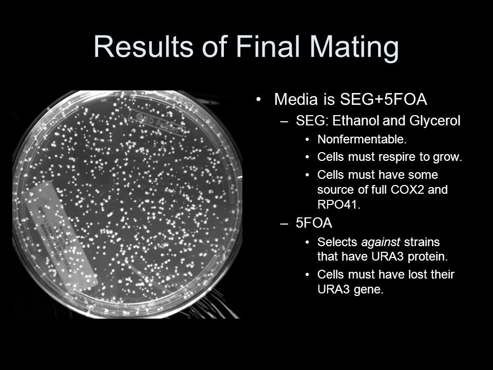 Results of Final Mating Media is SEG+5FOA –SEG: Ethanol and Glycerol Nonfermentable. Cells must respire to grow. Cells must have some source of full C