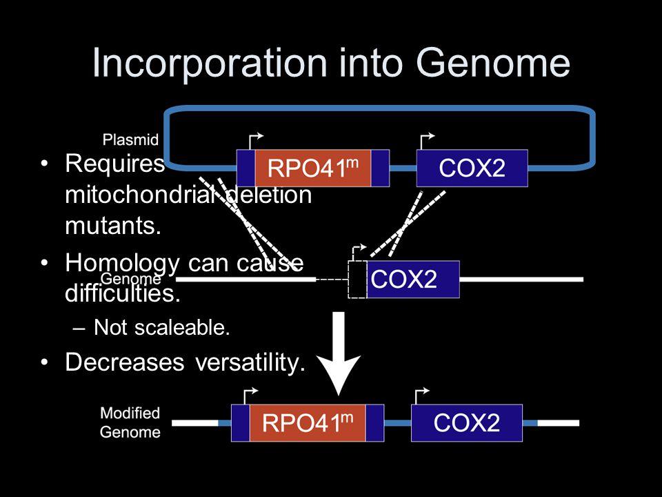 Using a Different Plasmid Plasmid Genome
