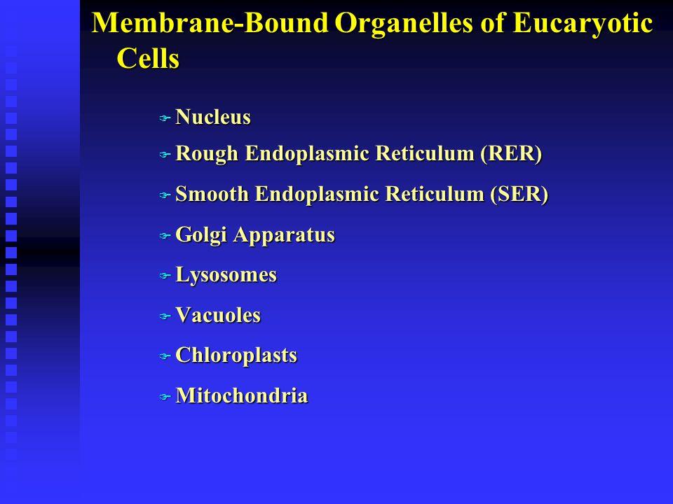 Membrane-Bound Organelles of Eucaryotic Cells F Nucleus F Rough Endoplasmic Reticulum (RER) F Smooth Endoplasmic Reticulum (SER) F Golgi Apparatus F L